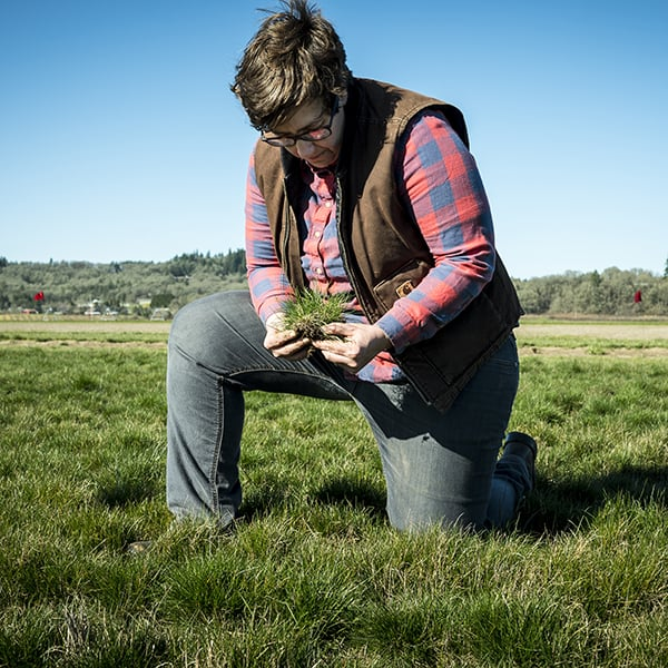 Nicole Anderson inspecting grass seed crop in a field.