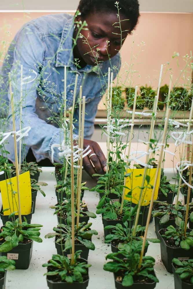 Khady examining plants in the laboratory