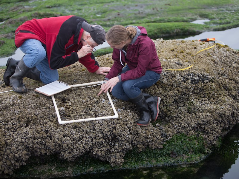 Sampling in the intertidal zone